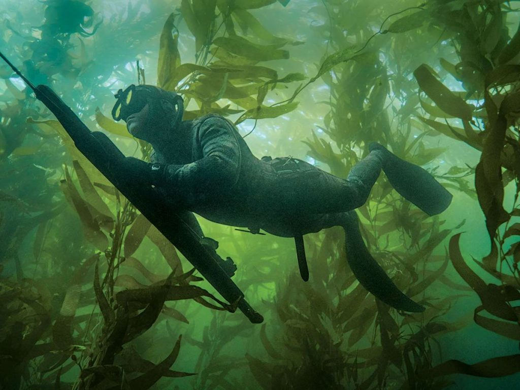 Spearo hunting through kelp